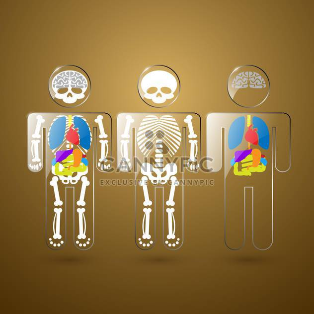 Abbildung der menschlichen Anatomie am Beispiel von Skelett und Organen - Kostenloses vector #132205