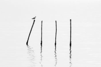 Seagull sitting on bamboo stick - image #136315 gratis