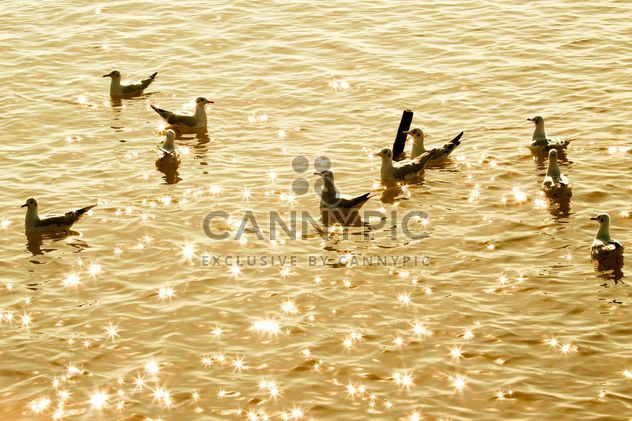 Crowd of seagull floating in the sea - Free image #136325