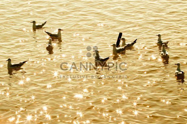 Masse der Möwe im Meer schwimmende - Kostenloses image #136325
