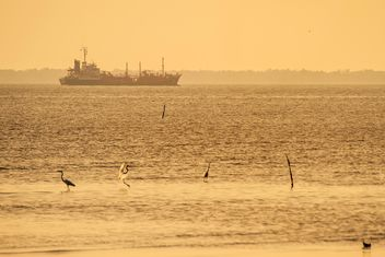 Birds on sea and ship on background - Free image #136355