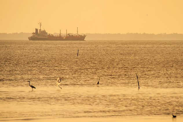 Birds on sea and ship on background - image #136355 gratis