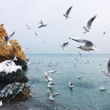 Seagulls flying over sea - image #136505 gratis