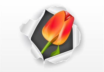 Paper And Tulip - vector gratuit #146355