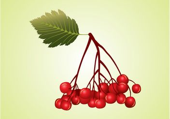 Berries Vector - vector #146425 gratis