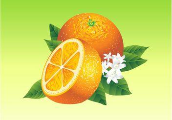 Realistic Oranges - Free vector #147575