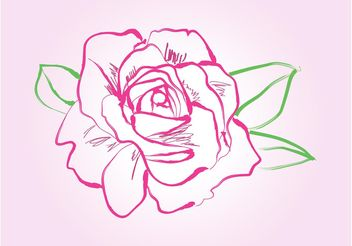 Rose Drawing Vector - vector gratuit #156685