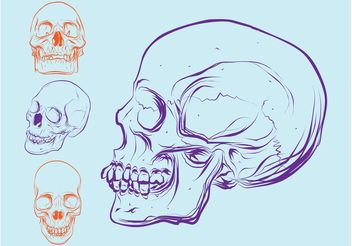 Colorful Skulls - Free vector #157115