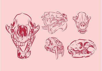 Animal Skulls - Free vector #157165