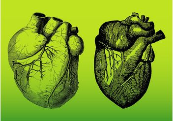 Realistic Hearts - Free vector #157525