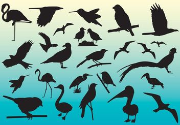 Free Birds Vector Silhouettes - Free vector #157675