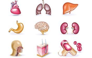 Human Organs - Free vector #174895
