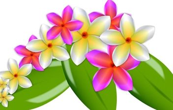 Plumeria Vector Flowers - Free vector #178585