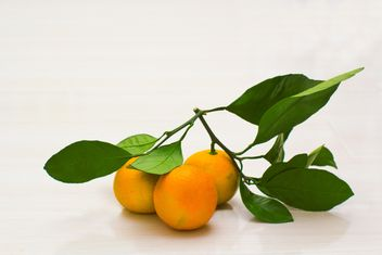 Branch of tangerines with leaves - Free image #182575
