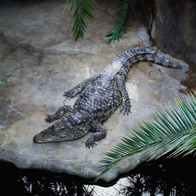Крокодил возле пруда в зоопарке - бесплатный image #183475