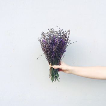 Lavender flowers in hand - Kostenloses image #183565