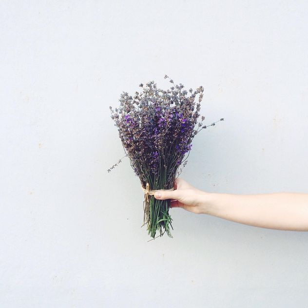 Lavender flowers in hand - бесплатный image #183565