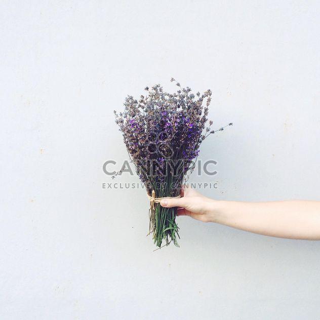 Lavendel Blumen in der hand - Kostenloses image #183565