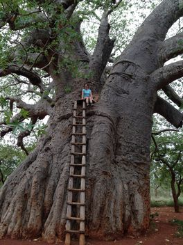 Girl on a giant baobab - image gratuit #183595