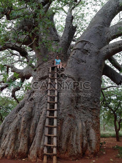 Niña en un baobab gigante - image #183595 gratis