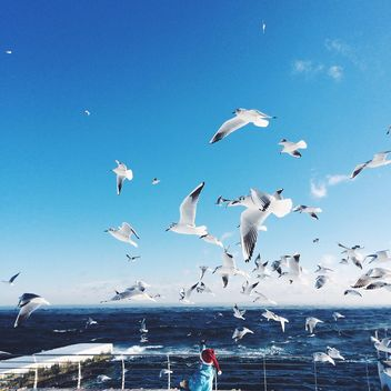Person feeding the seagulls - image #183945 gratis