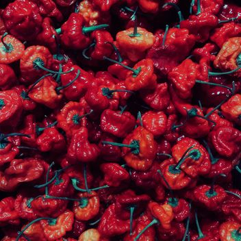 Red pepper - image gratuit(e) #184265