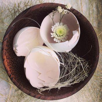 Eggshells - Free image #184385