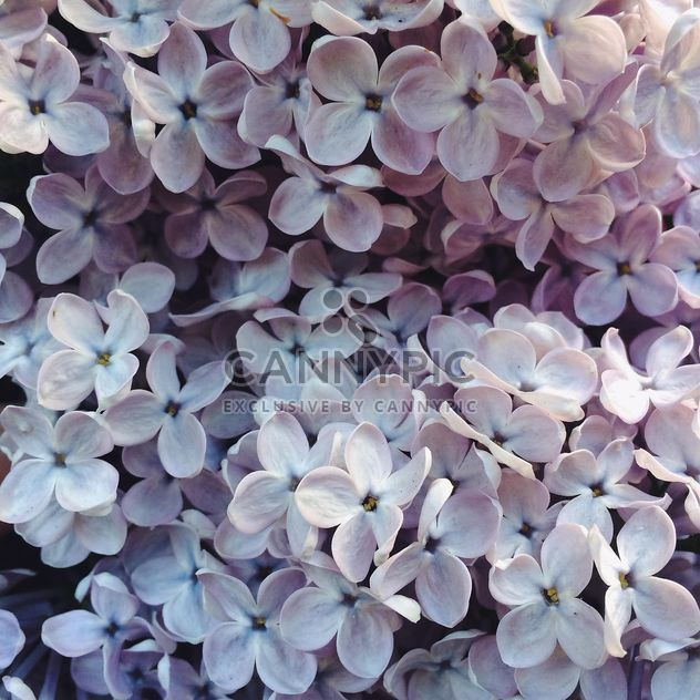 Flor lila - image #184535 gratis