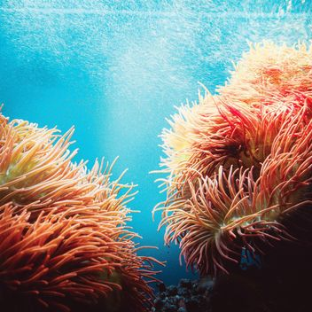 Actinias in aquarium - image #184605 gratis