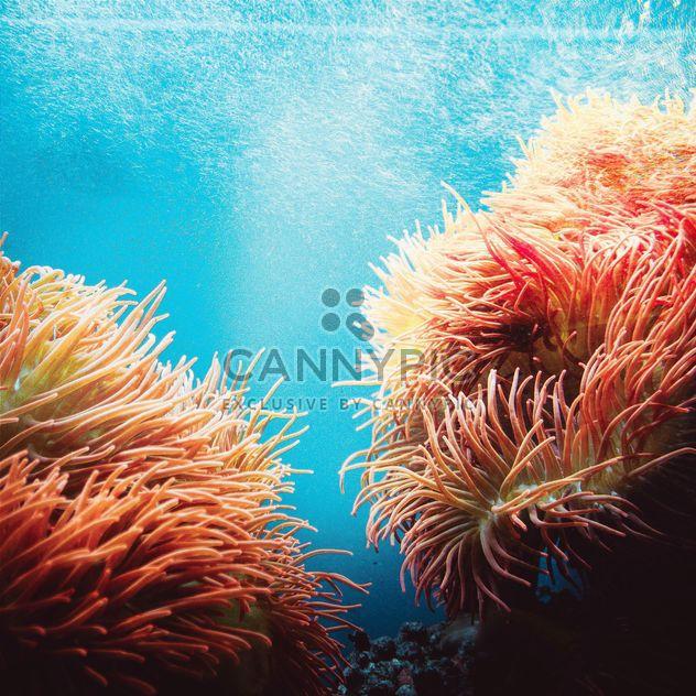 Actinias im aquarium - Kostenloses image #184605