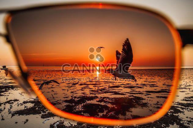 Mouette à travers des lunettes de soleil - image gratuit #184655