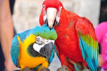 Ara parrots - image gratuit #185735