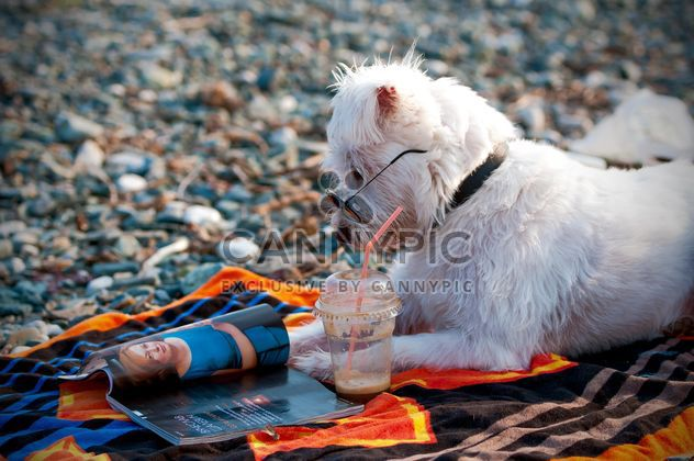 Cute dog in glasses reading magazine on the beach - Free image #186035