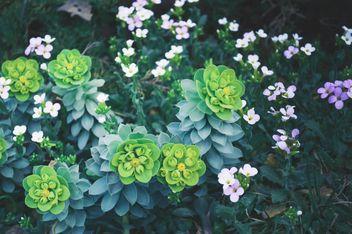 Spring flowers in garden - Kostenloses image #186185