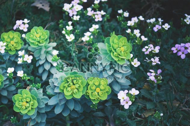Spring flowers in garden - Free image #186185