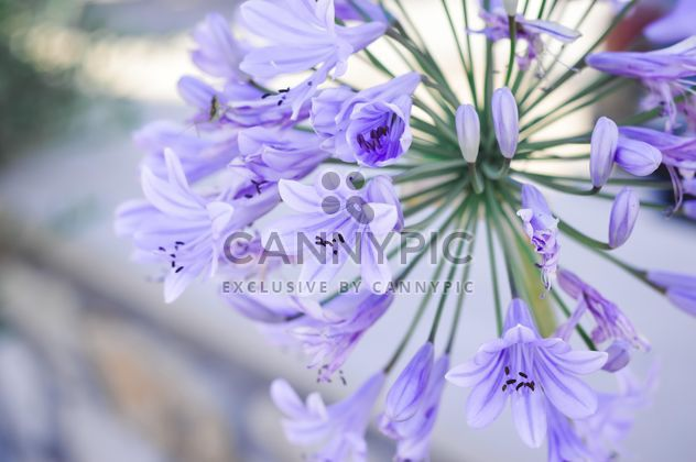 Small purple flowers - Free image #186255