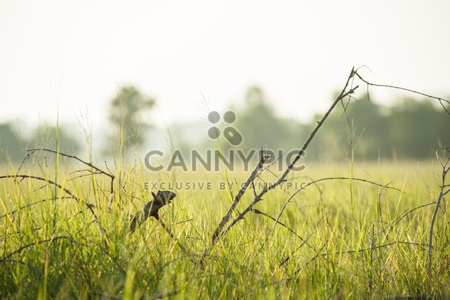 Деревья #grass #green #fields #fog #morning #country #branches - бесплатный image #186315