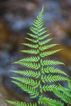 Fern leaf - Free image #186345