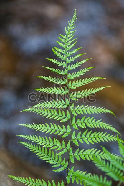 Fern leaf - image #186345 gratis
