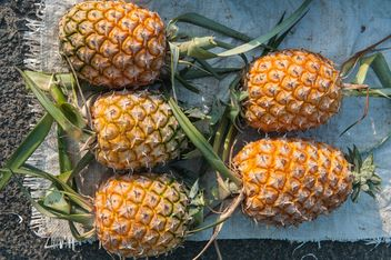 Pineapple - image #186415 gratis