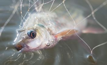 A fish in net - image #186485 gratis