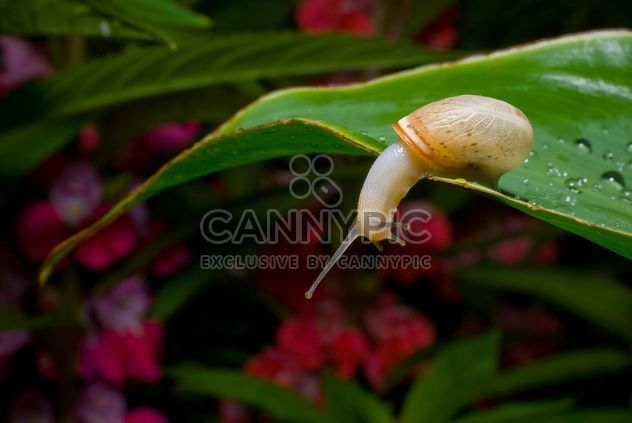 Snail on green leaf - Free image #187675