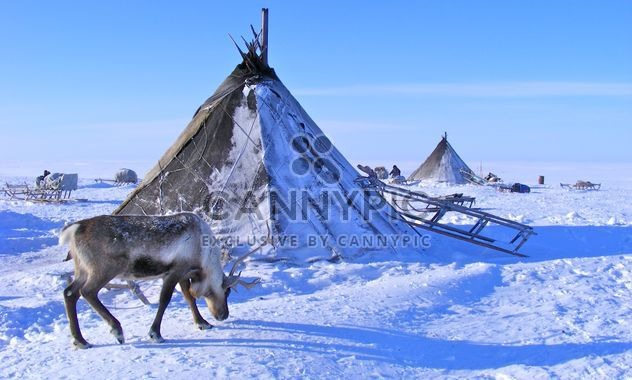 Spring on the Yamal Peninsula - Free image #197895