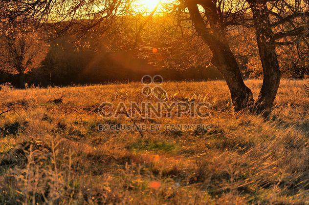 los rayos del sol a través de las ramas -  image #198165 gratis