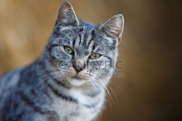 кошка крупным планом - бесплатный image #198555