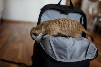 #inmybag #bag #meerkat - Kostenloses image #198585