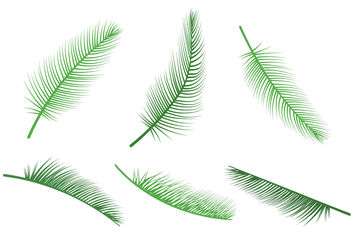Palm Leaf Vectors - Free vector #199325