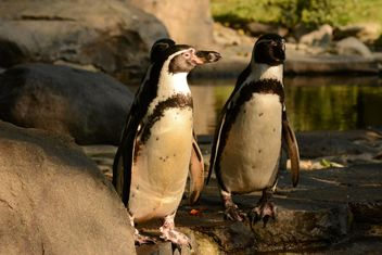 Penguins on the walk - image gratuit #201465