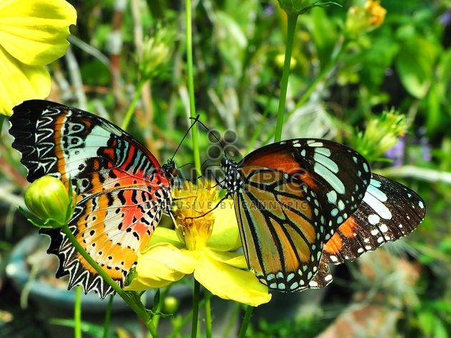 Paire de papillons sur les fleurs - image gratuit(e) #201545