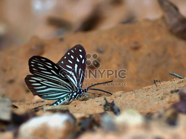 Borboleta de tigre azul escura - Free image #201565